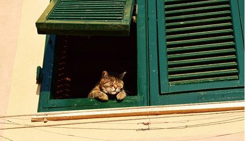 cat n window